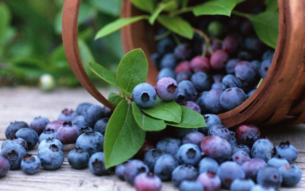 Afinele, deși de mici dimensiuni, sunt bogate în substanțe nutritive