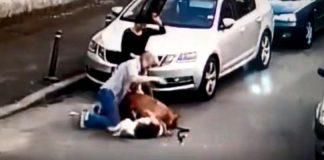 Câinele atacat de un Amstaff va supravieţui