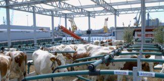 Prima fermă plutitoare din lume a apărut la Rotterdam