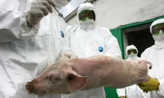 Alertă în Bulgaria după depistarea a noi focare de febră porcină africană