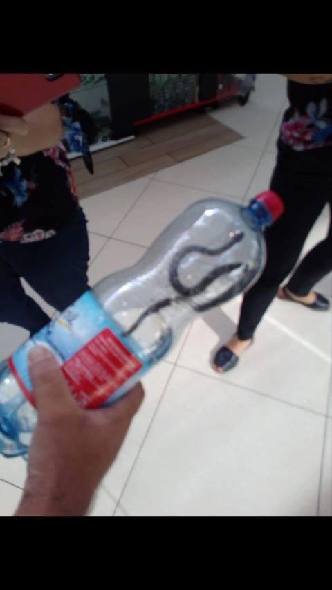 Șarpe descoperit la mall-ul din Târgu Jiu