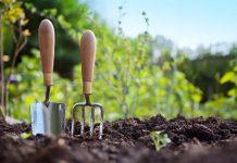 Sfaturi de grădinărit pentru începători
