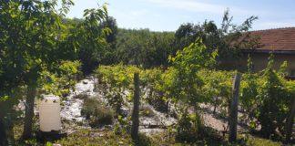 Viitura a afectat grădinile localnicilor din Poiana