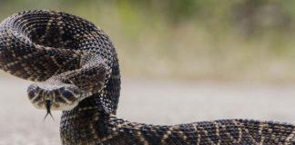 Un copil de 13 ani a fost muşcat de o viperă