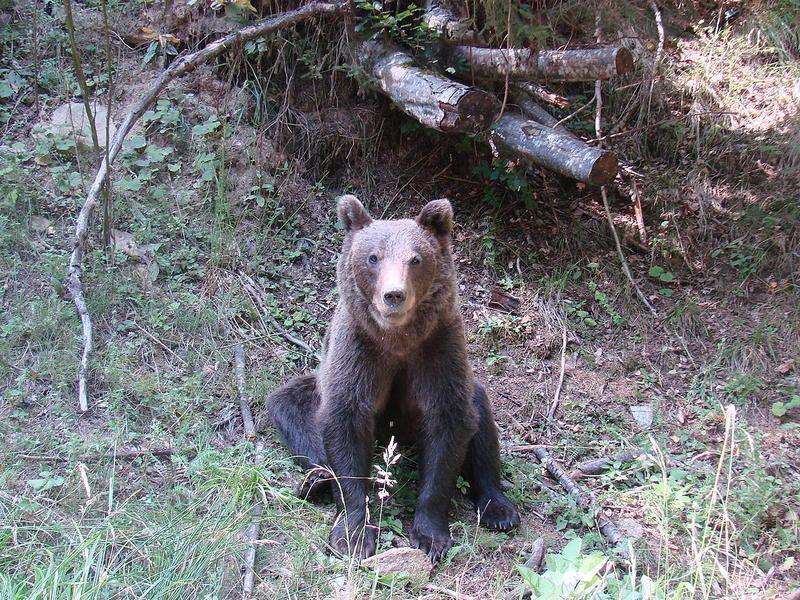 O fetiță și mama ei au fost atacate de urs