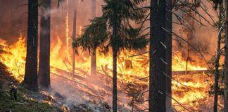 Incendii uriaşe de vegetaţie în Grecia