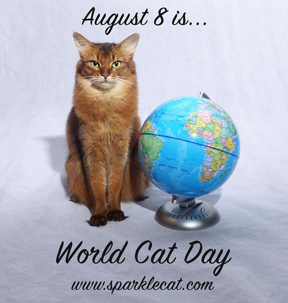 8 august, ziua internațională a pisicii – News Fm |Ziua Internațională A Pisicii