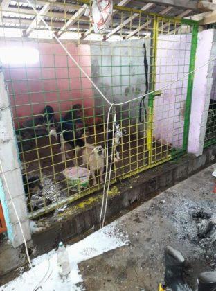 Un adăpost ilegal pentru câini a atras revolta iubitorilor de animale și un val de reclamații la primărie