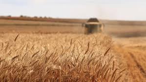 România are realizări de 47% din exportul european de grâu