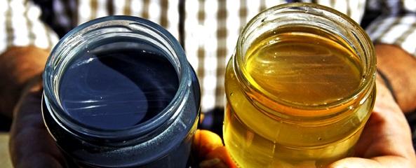 Mierea albastră – minune a naturii sau o malformație determinată de activitățile umane
