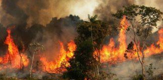 Brazilia refuză ajutorul propus de Macron legat de incendiile din Amazon