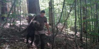 Ursoaica de la Lacul Sfânta Ana și cei trei pui ai săi au fost mutați