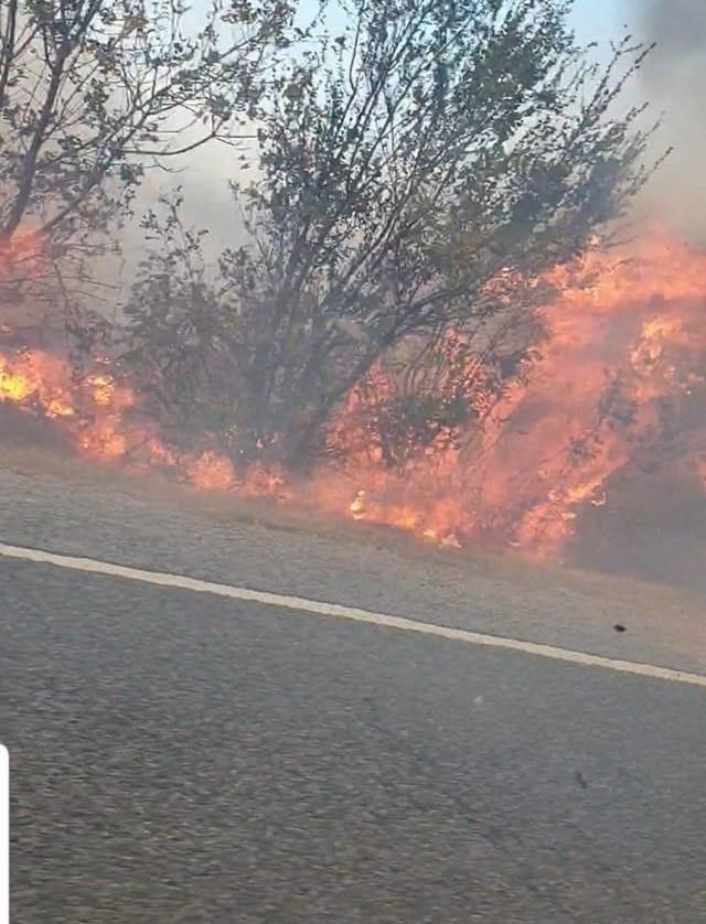 Gorj/ Incendiu la vegetație uscată, pe o suprafață de 30 de hectare, la Câmpu Mare