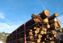 Bărbat prins transportând ilegal lemne