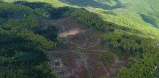 Speciile de arbori prezente în Europa, în pericol de dispariție