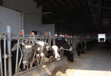 Fermele zootehnice sunt verificate de inspectorii APIA Gorj
