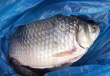 Depistat încercând să vândă peşte fără documente
