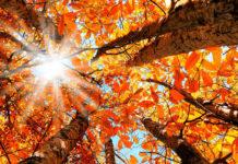 23 septembrie - Echinocțiul de toamnă reprezintă sfârșitul oficial al verii