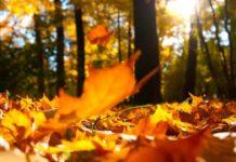 Temperaturi de până la 28 de grade în primele 4 zile din octombrie