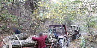 Bătrân anchetat pentru tăiere ilegală de lemne