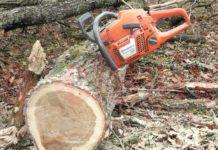 Tânăr prins la furat de arbori
