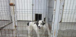 Costuri mai scumpe cu întreţinerea câinilor din Adăpostul de la Breasta