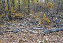Gorjul, pe primul loc pe țară în privința apelurilor la 112 pentru verificarea transporturilor de lemne