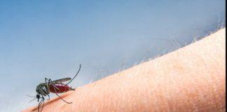 Un nou deces provocat de virusul West Nile