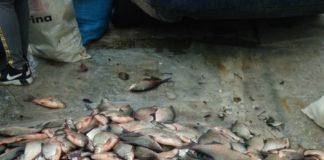 Peştele a fost pescuit din Jiu
