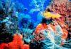 Formaţiunile de corali din Marea Caraibilor, distruse rapid de o boală