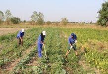 Tinerii fermieri români vor beneficia de 39,8 milioane de euro anual ca plată directă suplimentară, după 2020