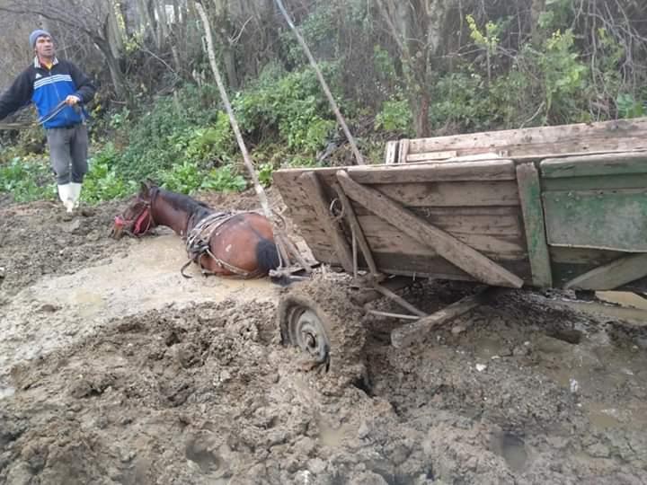 Un cal a rămas înțepenit în nămol la Coțofenii din Față