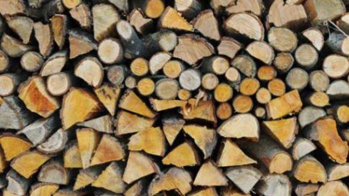 Razie printre taietorii de lemne