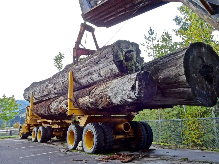 Guvernul ia în calcul interzicerea exportului de masă lemnoasă în afara spațiului UE