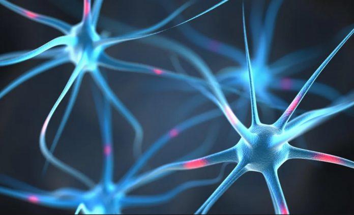 Neuroni artificiali ar putea fi implantaţi pentru a repara circuitele din creier