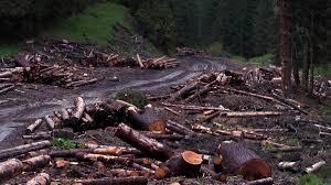 România, secătuită de resurse. 3 hectare de pădure dispar în fiecare oră