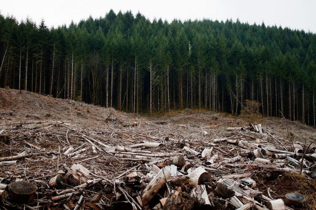 Comisia Europeană a solicitat astăzi ca autoritățile române să intervină de urgentă pentru a opri tăierea ilegală a pădurilor primare din ariile protejate