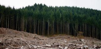 Klaus Iohannis anunță că se va implica în tăierile ilegale de lemn din România