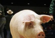 Crăciun cu restricții privind circulația animalelor în jumătate din localitățile din Olt