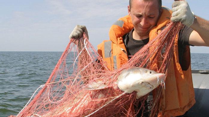 Navă de pescuit japoneză, sechestrată de Rusia