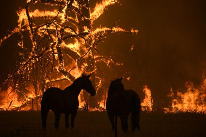 Peste un miliard de animale au pierit în incendiile din Australia
