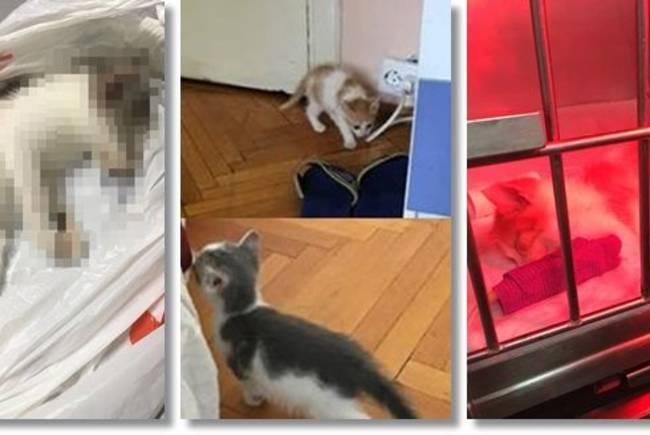 Un timişorean, trimis în judecată pentru că a omorât pisicile pe care le adoptase