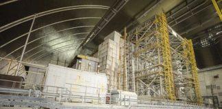 Ciuperci ce absorb radiaţii, descoperite la Cernobîl