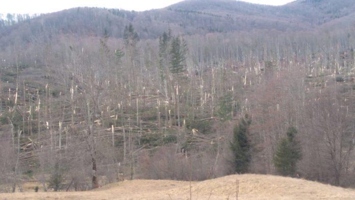 98.000 de hectare de păduri administrate de Romsilva, afectate de fenomene meteo extreme