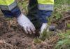 Ministerul Mediului anunţă reîmpădurirea zonelor defrișate