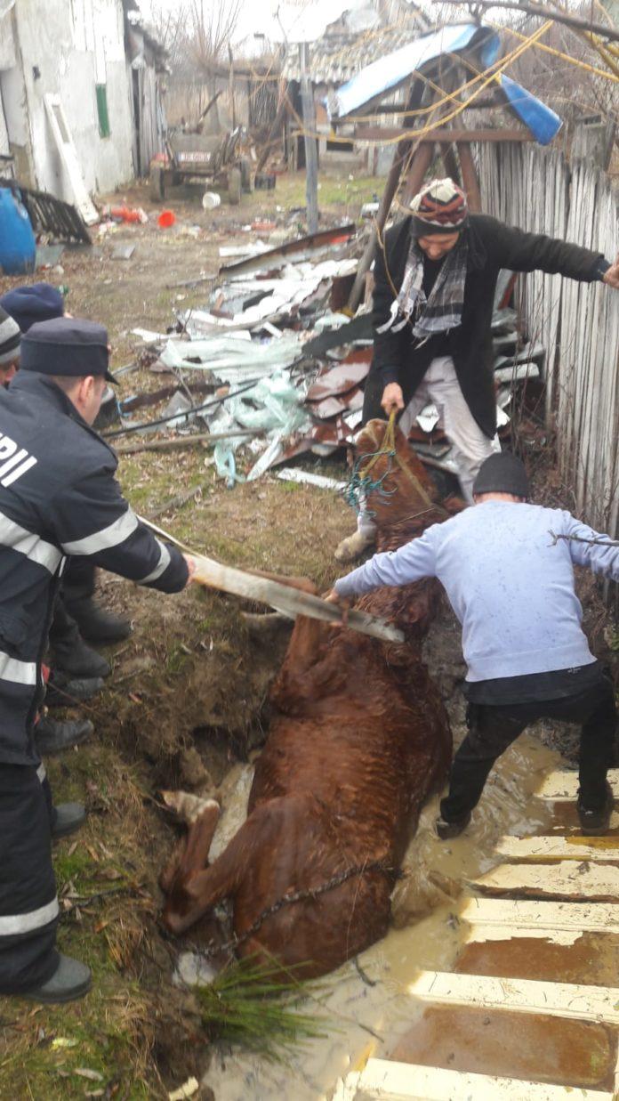 Vâlcea: Salvare contracronometru a unui cal