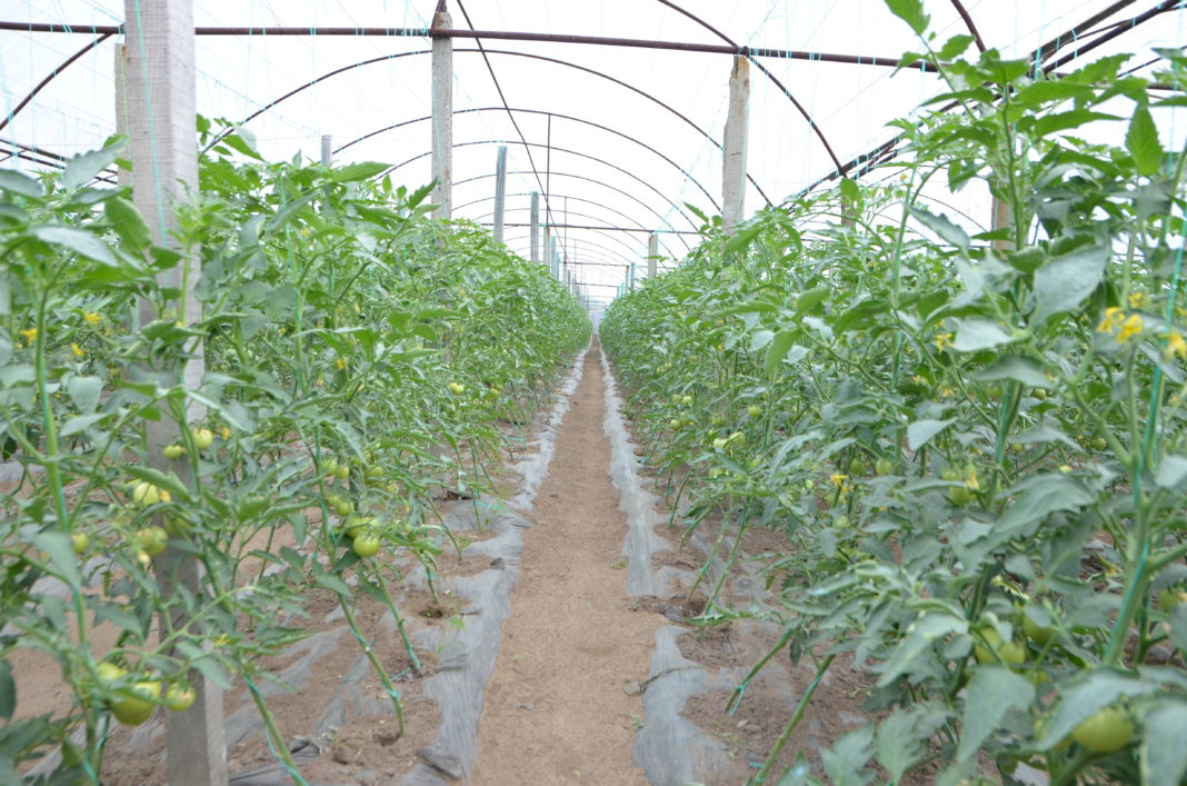 În 2018, valoarea ajutorului de minims pentru cultivatorii de tomate a fost de 3.000 euro/beneficiar.