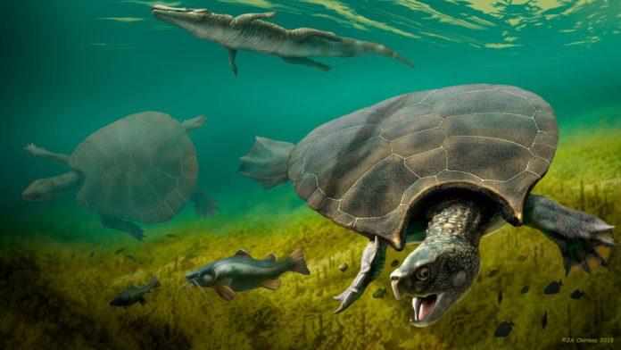 Cea mai mare broască țestoasă din lume era cât o mașină