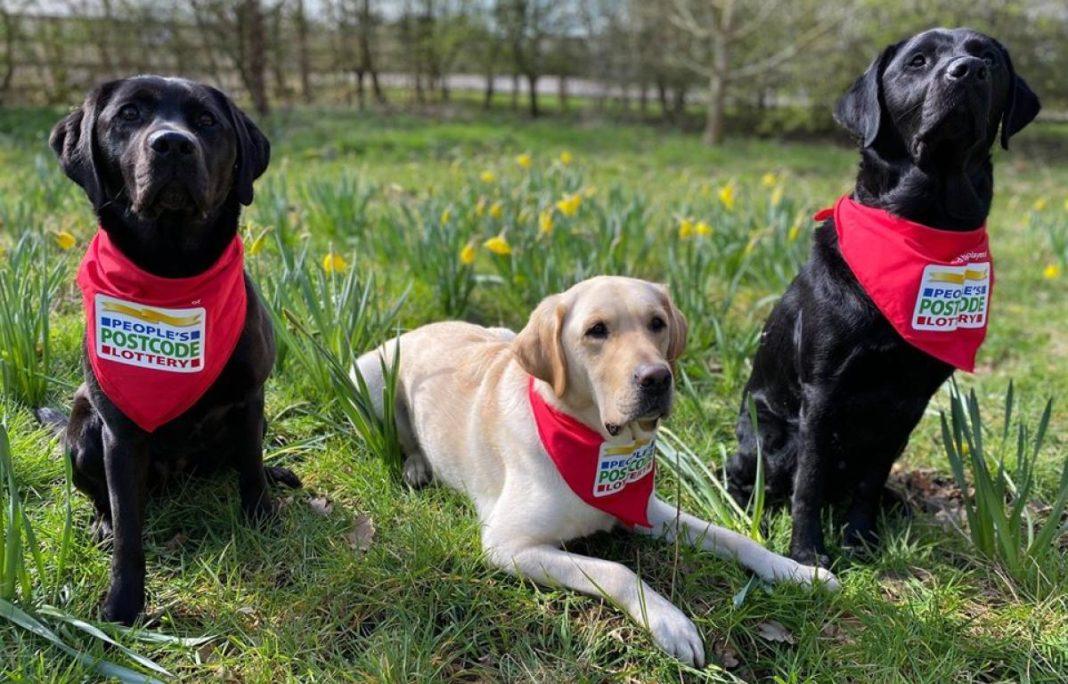 O asociație din Marea Britanie dresează câini pentru a depista COVID-19