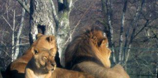 Animalele de la grădina zoologică Novara din Italia pot rămâne fără hrană